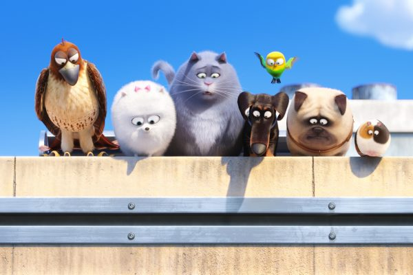 Seven pets, including two birds, dogs and cats, line up on a wall. Still from The Secret Life of Pets