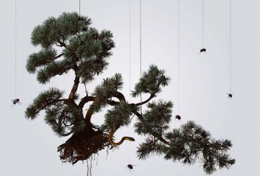 Hong Lei, Speak, Memory of Five-Needle Pine, 2005. Chromogenic print, 37 1/8 x 47 1/8 inches (94.3 x 119.7 cm). Collection of the Nasher Museum. Museum purchase.